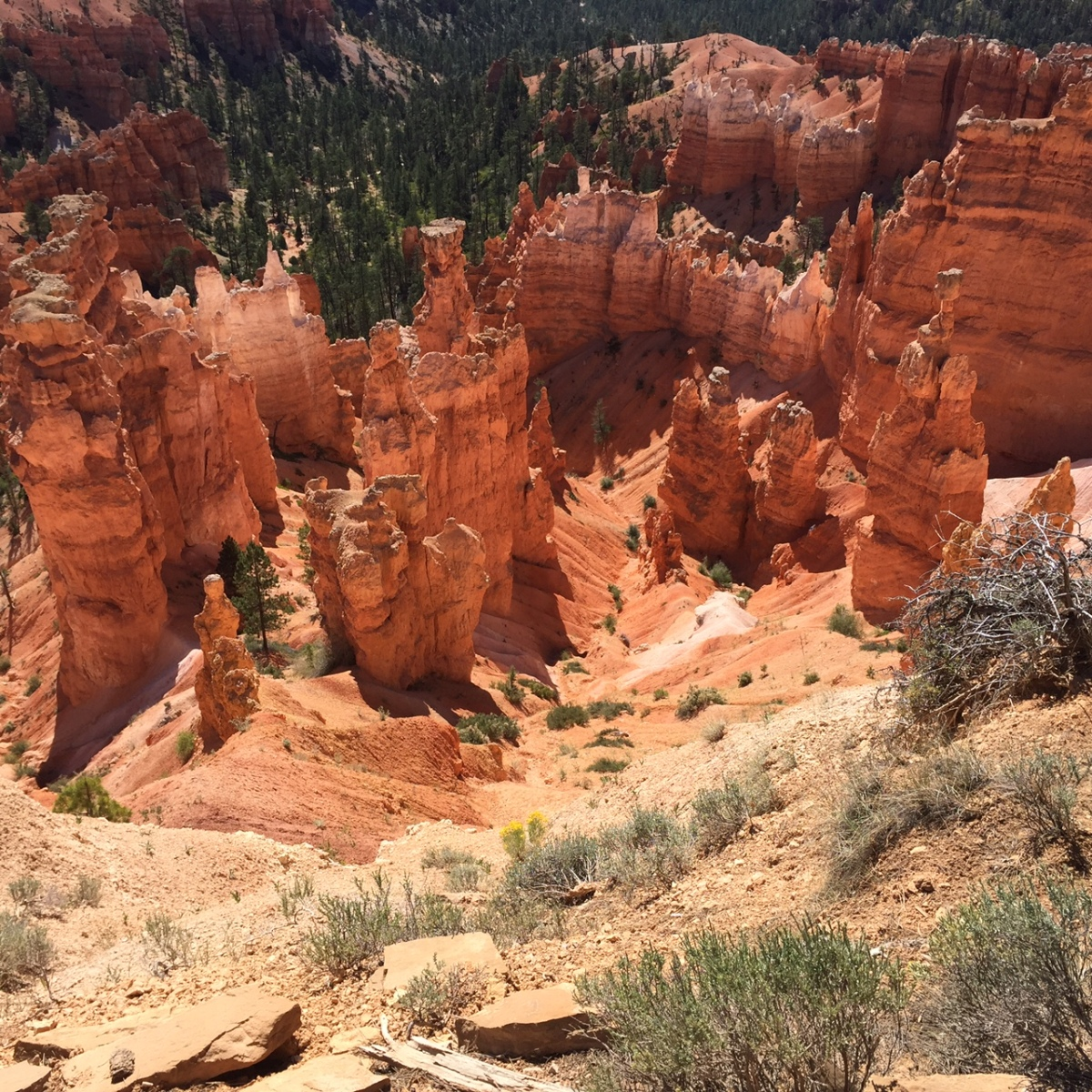 Picture of the Day – BryceCanyon