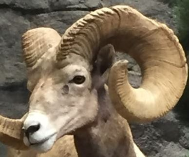 Bighorn Travel Blog
