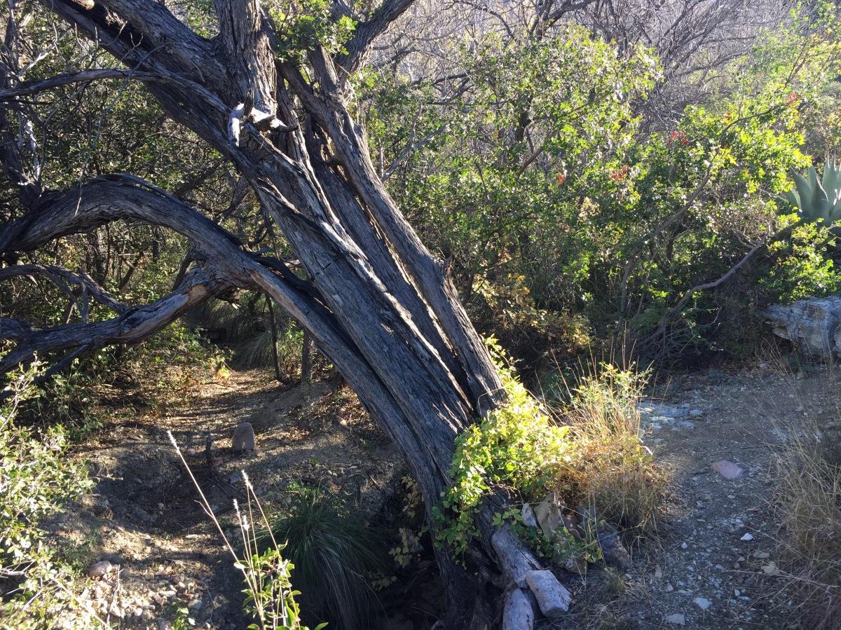 Sunday Hikes: Ward SpringTrail