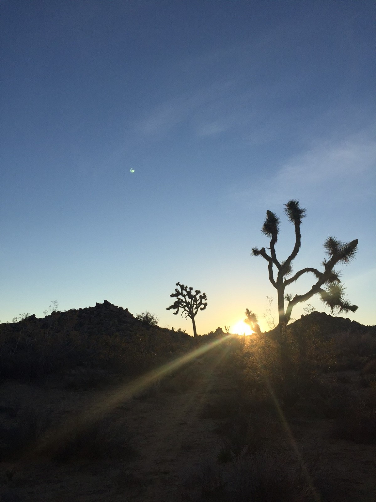 Sunday Hikes: Lions, Tarantulas, and Giant Hares on the Boy Scout Trail in Joshua TreeNP