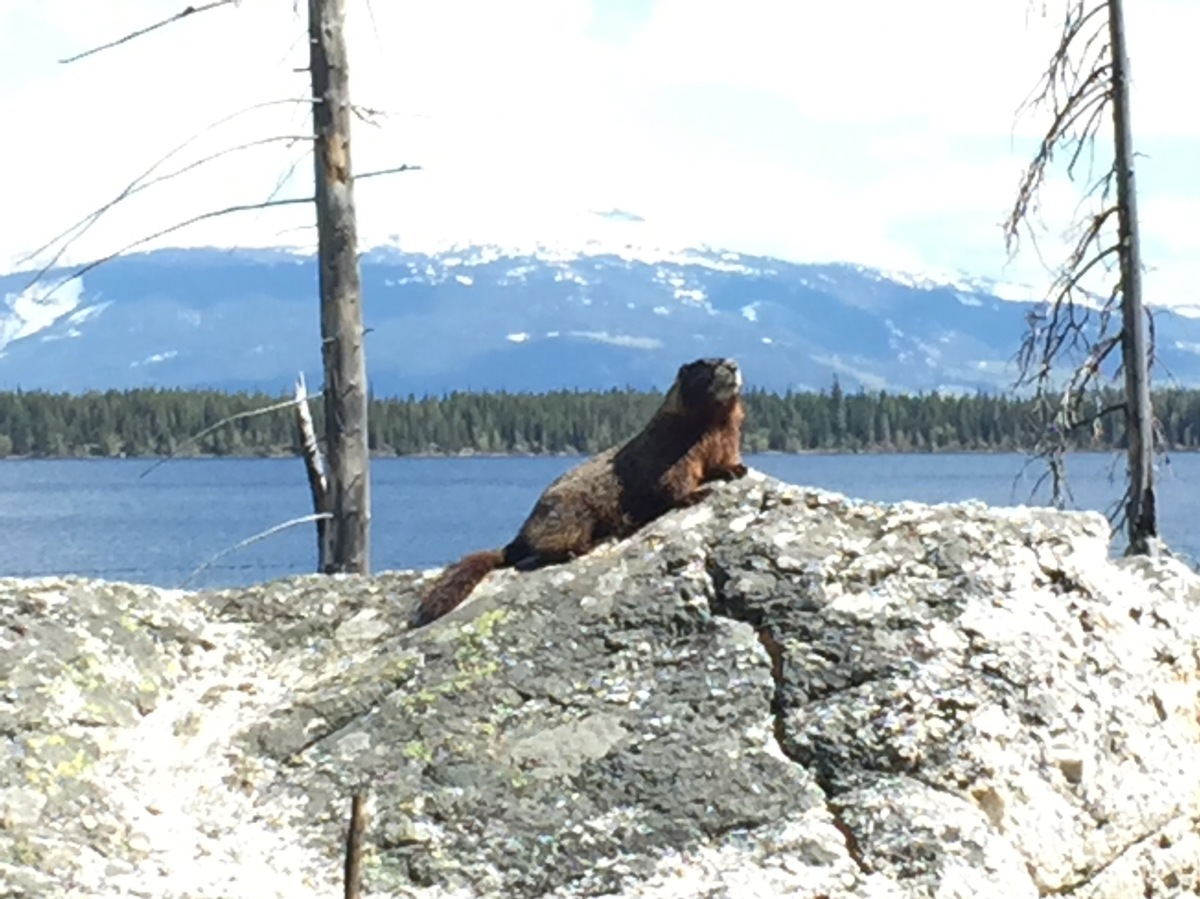 Picture of the Day: Marmot posing in Grand Teton National Park