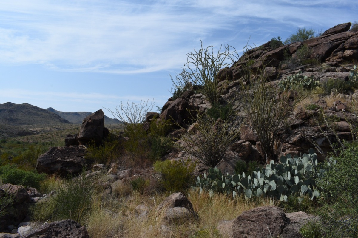Picture of the Day: The LivingDesert