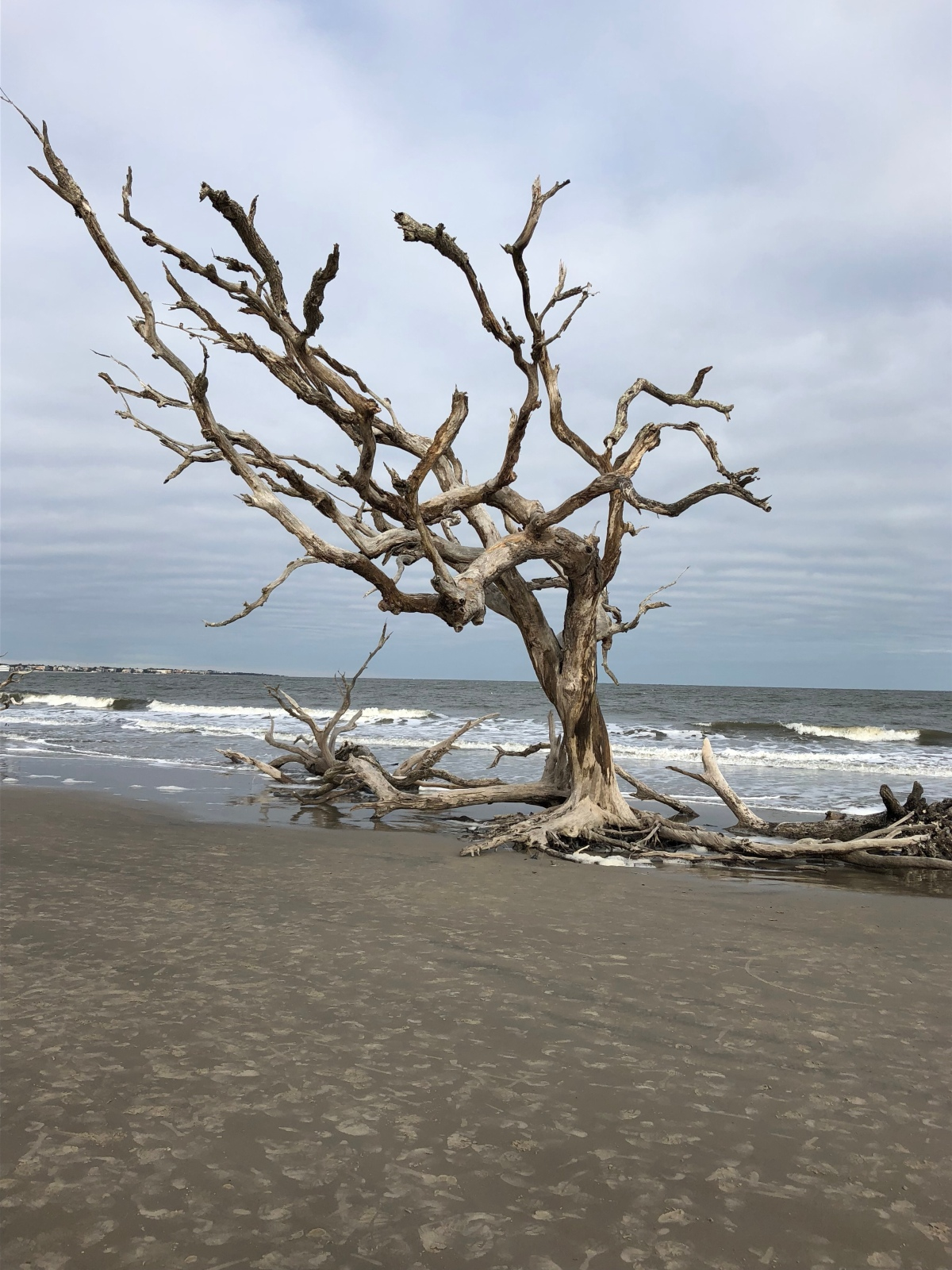 Picture of the Day: DriftwoodBeach
