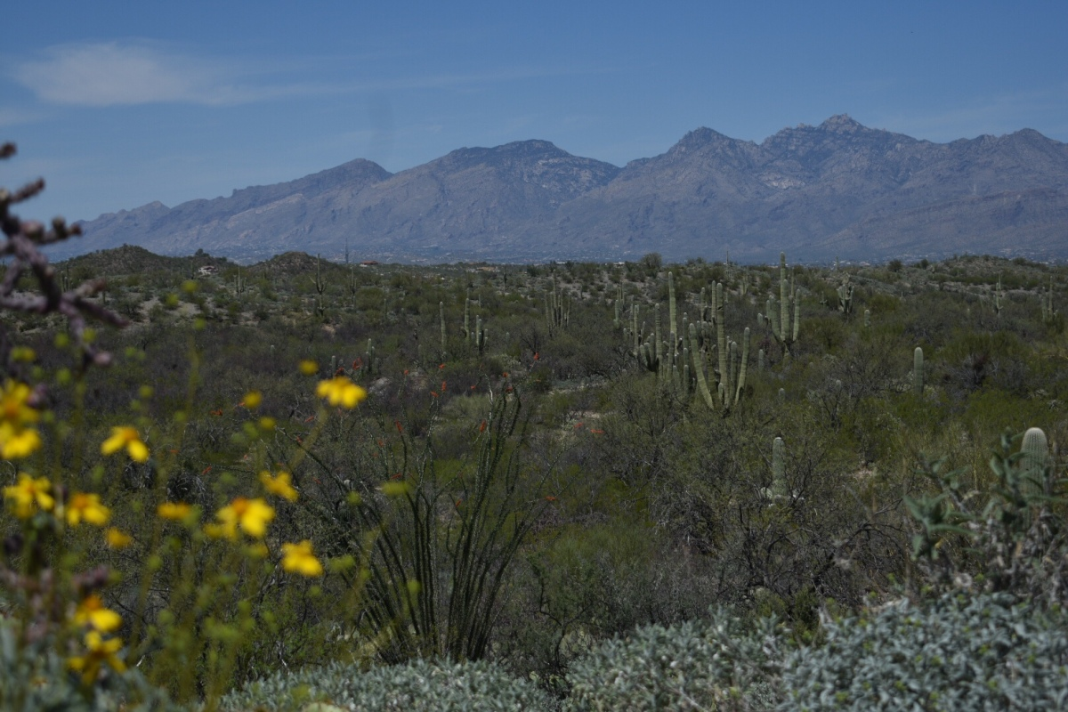 Picture of the Day: Santa Catalina Mountains