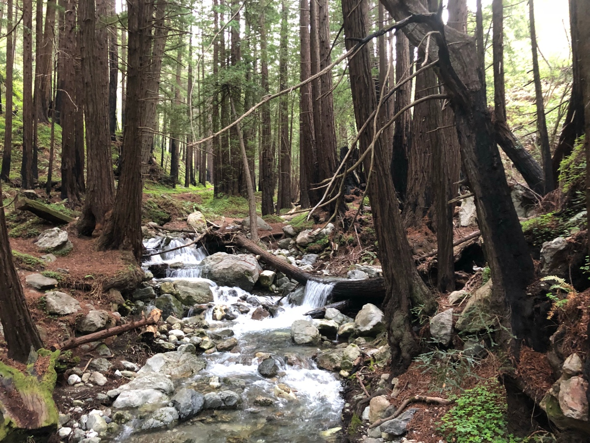 Sunday Hikes:  Waterfall and Lime Kiln Trails in Big Sur