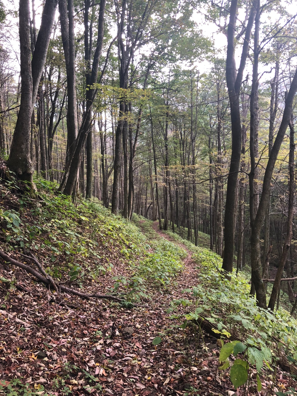 Sunday Hikes: TheChannels