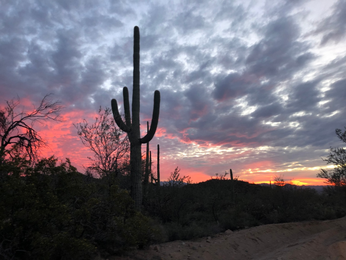 Picture of the Day:  Sunset in Saguaro National Park