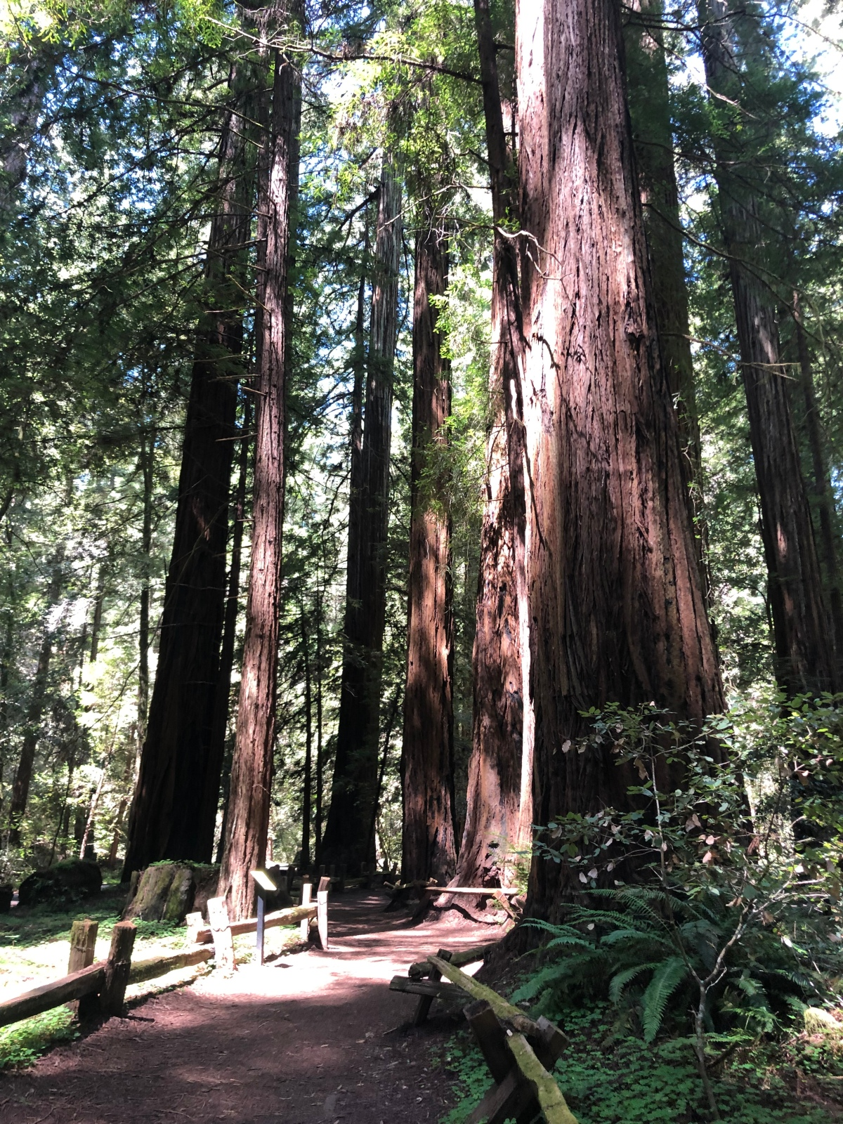 Sunday Hikes:  Armstrong Redwoods State Natural Reserve